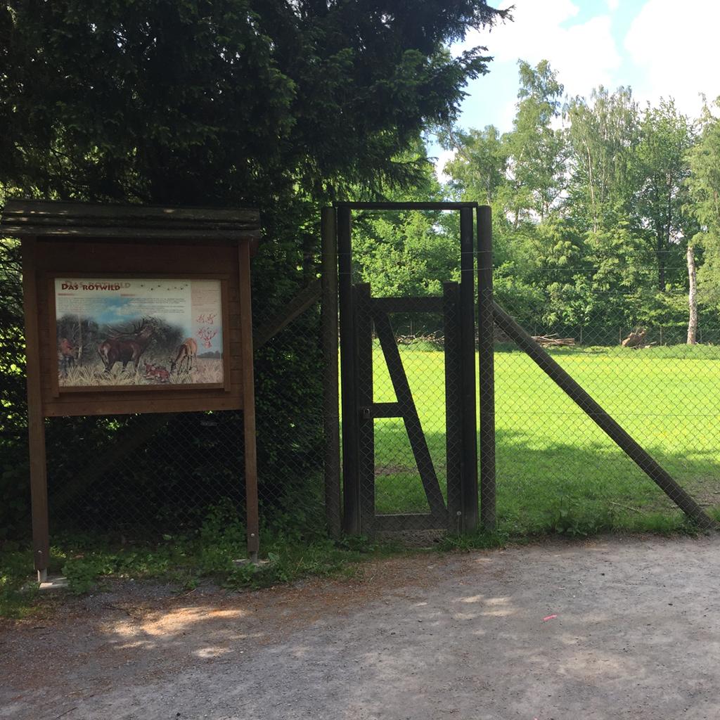 Das Rotwildgehege im Wildpark