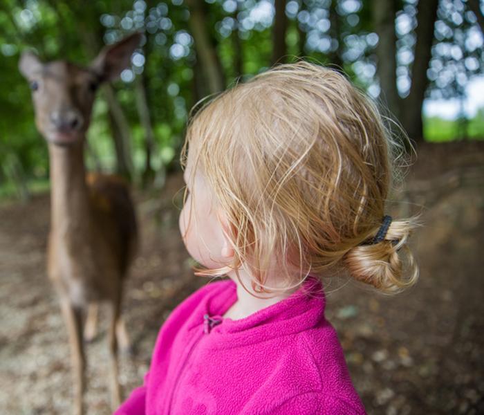 Kind schaut auf Reh