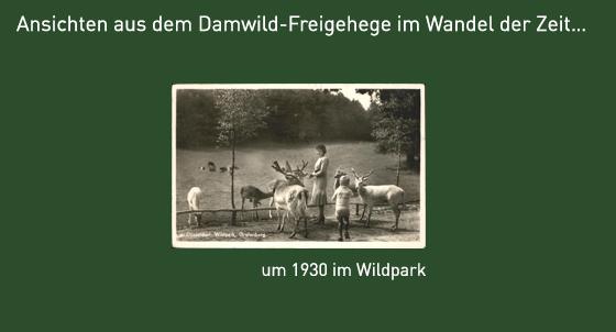 Ansicht des Damwildgeheges um 1927